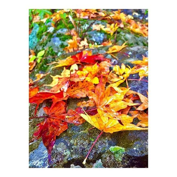 笑顔の架け橋Rainbowプロジェクト - Hey Autumn! I just wanna say I have FALLen for you!😉❤️🍂🍁 #fall #autumn #vibes #kamaishi #iwate #tohoku #gogotohoku #cultural #experience #東北の風景 #ドコモレインボープロジェクト